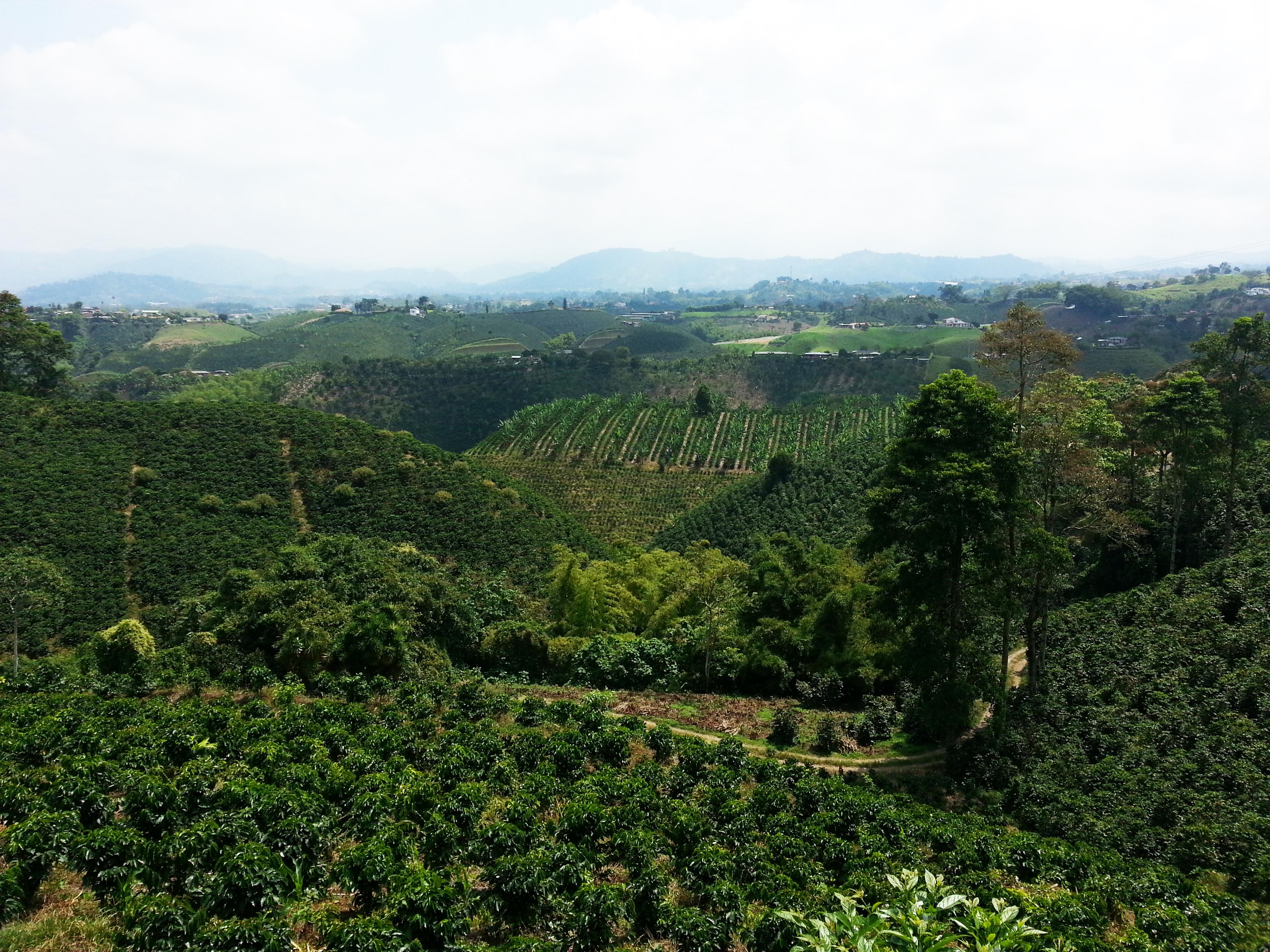 El paisaje cultural cafetero | Colombia