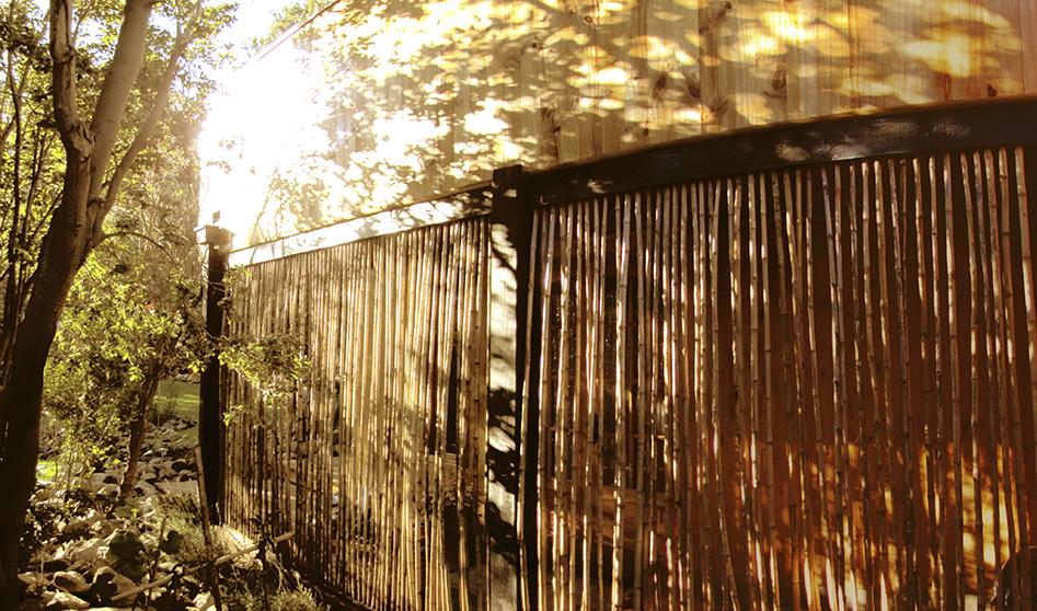 Luces y sombras de un bosque: Casa Carmona | Olmué