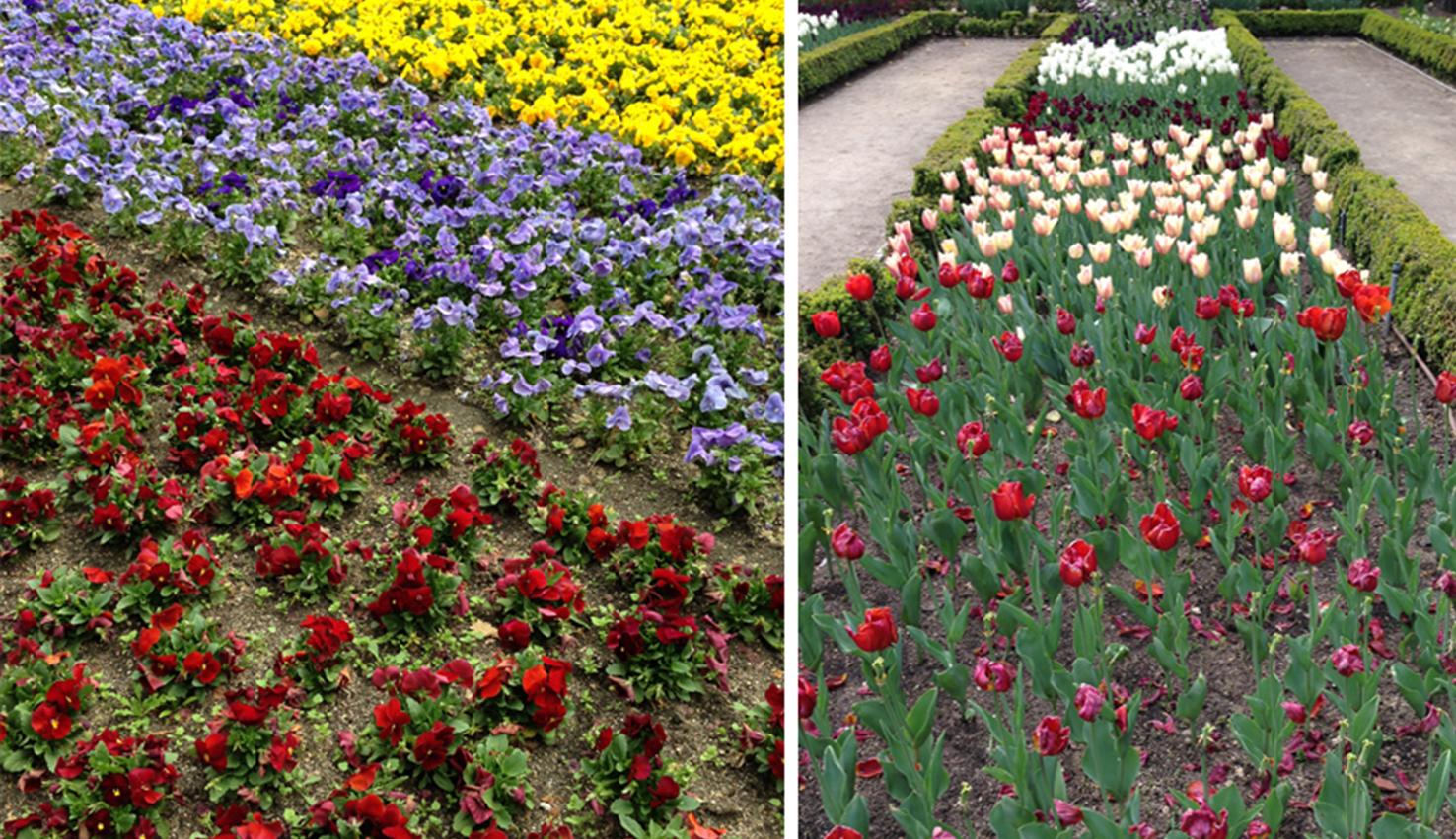Una pausa en el Jardín Botánico de Madrid | España