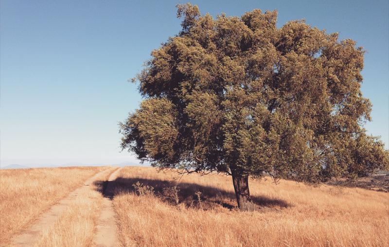 Apertura 2016: Un día en la vida de un árbol