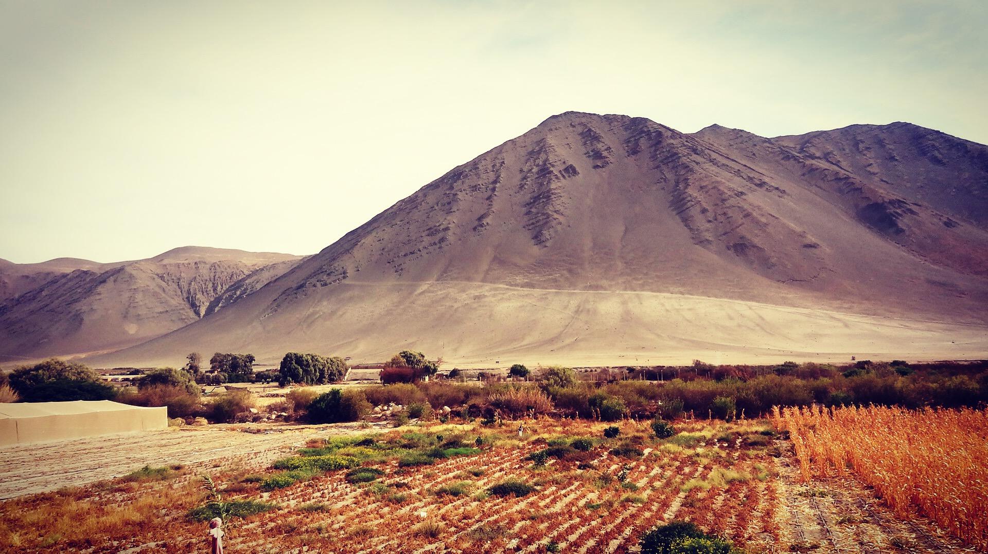 Paseando por Caleta Vítor | XV Región de Arica y Parinacota