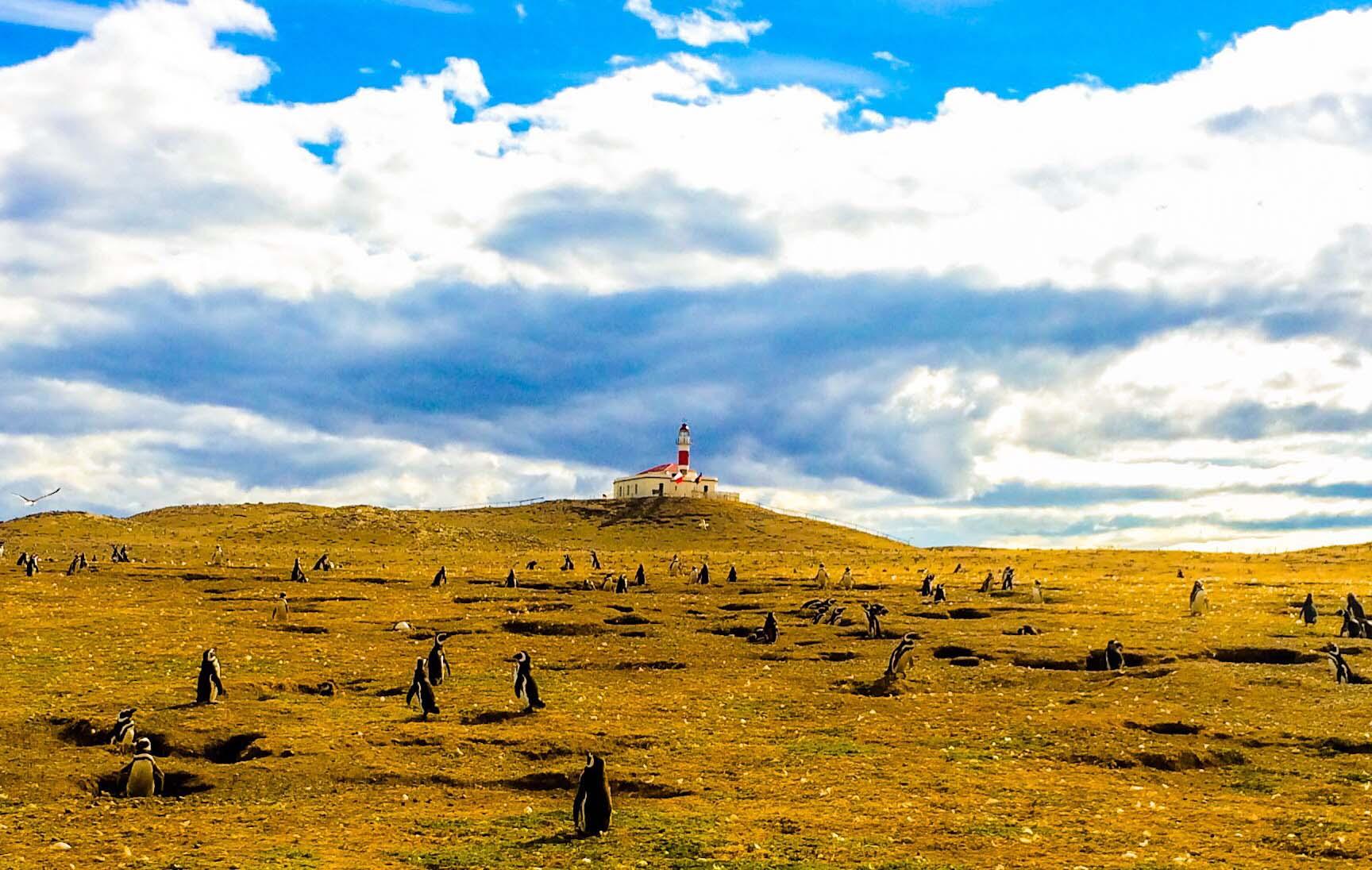 Mar, viento y pingüinos en Isla Magdalena | XII Región de Magallanes
